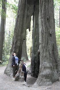 Humboldt Redwood State Park